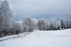 Fondo de la Navidad con los árboles nevosos Fotos de archivo libres de regalías