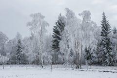 Fondo de la Navidad con los árboles nevosos Imagen de archivo