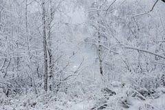 Fondo de la Navidad con los árboles nevosos Foto de archivo