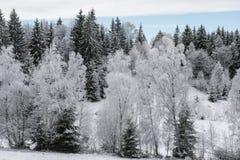 Fondo de la Navidad con los árboles nevosos Foto de archivo libre de regalías