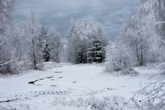 Fondo de la Navidad con los árboles nevosos Fotografía de archivo