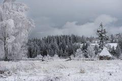Fondo de la Navidad con los árboles nevosos Fotos de archivo
