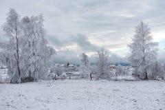 Fondo de la Navidad con los árboles nevosos Imágenes de archivo libres de regalías