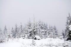 Fondo de la Navidad con los abetos nevosos Fotos de archivo libres de regalías