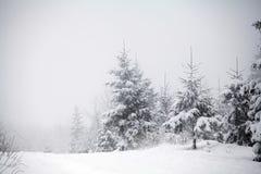 Fondo de la Navidad con los abetos nevosos Fotografía de archivo libre de regalías