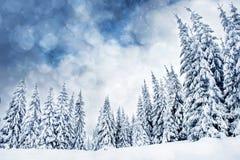 Fondo de la Navidad con los abetos y las luces nevosos del bokeh Fotografía de archivo libre de regalías