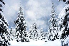 Fondo de la Navidad con los abetos y las luces nevosos del bokeh Imagen de archivo