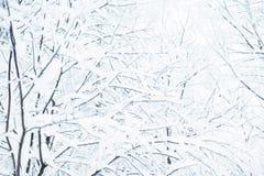 Fondo de la Navidad del invierno con las ramas de árbol nevosas de abeto Foto de archivo libre de regalías