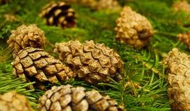 Fondo de la Navidad de los conos del pino macros Imagen de archivo