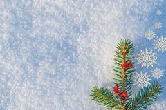 Fondo de la Navidad y del Año Nuevo Rama de la picea azul, adornada con las bayas de la ceniza de montaña en invierno natural de  Foto de archivo