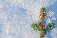 Fondo de la Navidad y del Año Nuevo Rama de la picea azul, adornada con las bayas de la ceniza de montaña en invierno natural de  Fotos de archivo