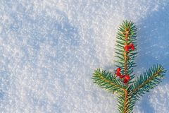 Fondo de la Navidad y del Año Nuevo Rama de la picea azul, adornada con las bayas de la ceniza de montaña en invierno natural de  Fotos de archivo libres de regalías