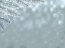 Fondo de la nieve con la rama del abeto Fotos de archivo