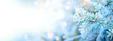 Fondo de la nieve del día de fiesta del árbol del invierno Diseño del arte de la frontera picea, del árbol azules de la Navidad y fotografía de archivo