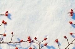 Fondo de la nieve del invierno adornado con las bayas de la cadera color de rosa fotos de archivo libres de regalías