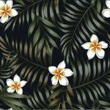 Fondo de la noche del modelo inconsútil tropical de las hojas y de las flores Foto de archivo
