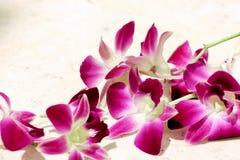 Fondo de la opinión de la flor de la orquídea Fotografía de archivo libre de regalías