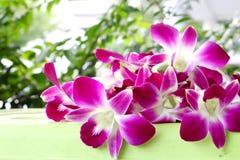 Fondo de la opinión de la flor de la orquídea Imagenes de archivo