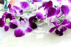 Fondo de la opinión de la flor de la orquídea Fotos de archivo libres de regalías