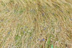 Fondo de la opinión floral de la cubierta de la tierra del campo desde arriba Fotografía de archivo libre de regalías