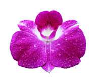 Fondo de la orquídea Fotos de archivo