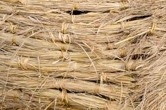 Fondo de la paja del arroz Fotos de archivo libres de regalías