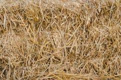 Fondo de la paja del arroz Foto de archivo