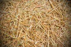 Fondo de la paja del arroz   Imágenes de archivo libres de regalías