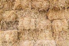 Fondo de la paja del arroz Foto de archivo libre de regalías