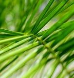 Fondo de la palmera Imagenes de archivo