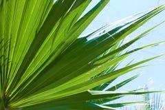 Fondo de la palmera imagen de archivo