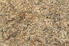Fondo de la pared del yeso del cemento del color de Emperador Foto de archivo libre de regalías