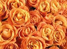 Fondo de la pared de las flores con sorprender roses1 fotos de archivo