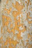 Fondo de la peladura de la corteza de árbol Foto de archivo libre de regalías