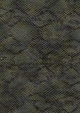 Fondo de la piel de serpiente Imágenes de archivo libres de regalías
