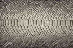 Fondo de la piel de serpiente Imagen de archivo