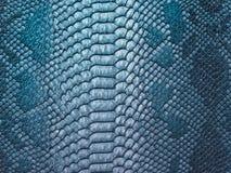 Fondo de la piel de serpiente Fotografía de archivo