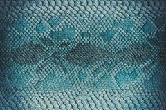 Fondo de la piel de serpiente Imagen de archivo libre de regalías