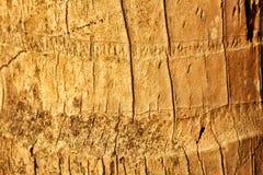 Fondo de la piel del árbol de coco imagenes de archivo