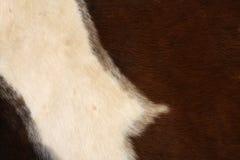 Fondo de la piel del caballo Foto de archivo