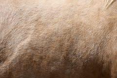 Fondo de la piel del caballo Imágenes de archivo libres de regalías