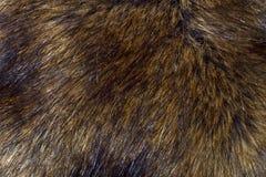 Fondo de la piel del lince Foto de archivo