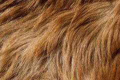 Fondo de la piel del oso Imagen de archivo