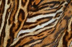 Fondo de la piel del tigre imágenes de archivo libres de regalías
