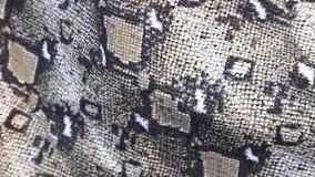 Fondo de la piel de serpiente Cierre para arriba Texturice el cierre de cuero auténtico para arriba metrajes