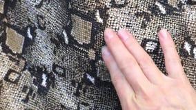 Fondo de la piel de serpiente Cierre para arriba almacen de metraje de vídeo