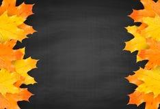 Fondo de la pizarra del otoño con las hojas de arce realistas stock de ilustración