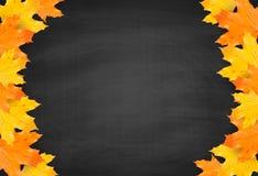 Fondo de la pizarra del otoño con las hojas de arce realistas ilustración del vector
