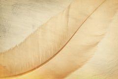Fondo de la pluma Fotografía de archivo libre de regalías