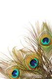 Fondo de la pluma del pavo real Foto de archivo libre de regalías